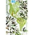 Harta migratiei pasarilor National Geographic